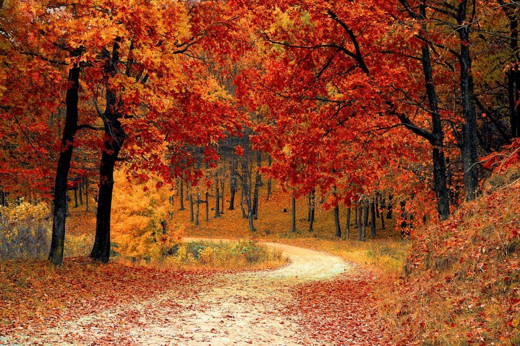 czy mozna zasiedzieć las państwowy?